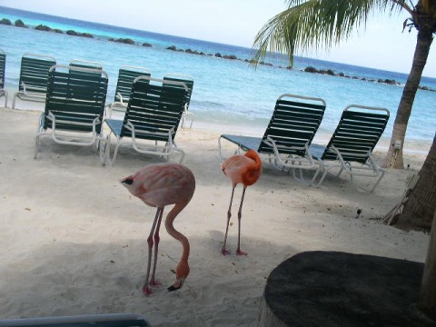 Marriott Aruba Beach Chairs