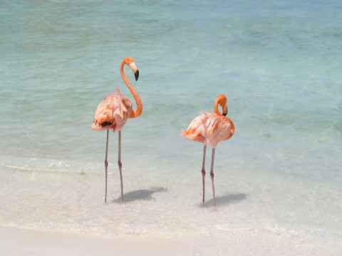 Marriott Aruba Flamingos